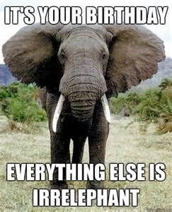 Elephant Meme - the 25 best birthday wishes quotes on pinterest happy