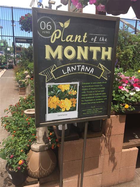 Garden Center Marketing by Best 25 Garden Centre Ideas On Planters