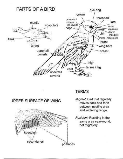 printable zoology worksheets 640 best images about print science on pinterest