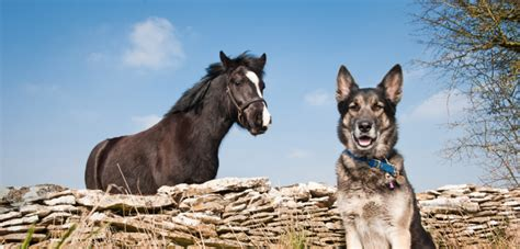 puppies and horses keep dogs and horses safe around each other blue cross