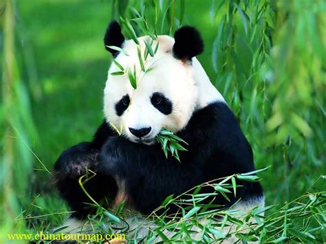World Of Beer Internship Giant Panda