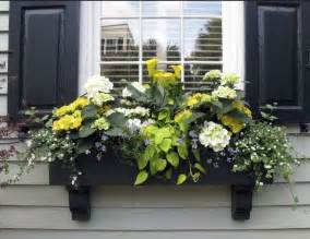 Flowers For Planter Boxes In Sun by 25 Best Ideas About Window Box Flowers On