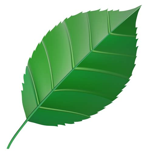 leaf clipart leaves clipart green leaf pencil and in color leaves