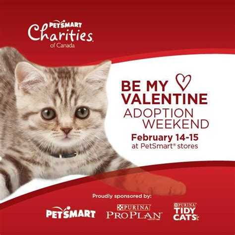 valentines weekends find at petsmart this valentines weekend town cats