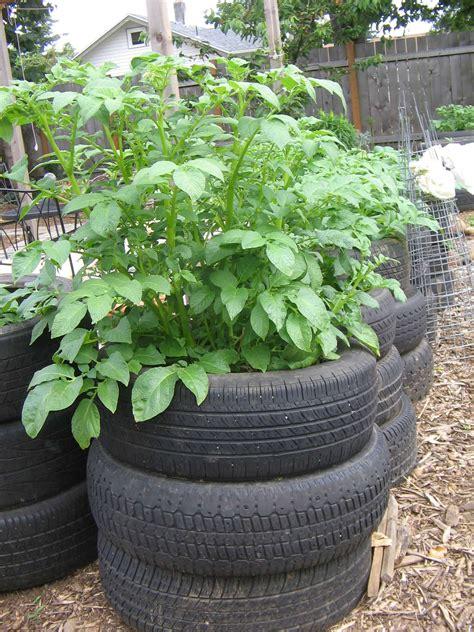 Gardening Potatoes Tire Potato Garden How To Grow Potatoes In Tire Towers