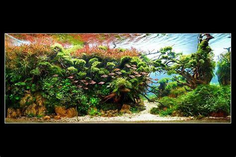 harry planter  iaplc fantasyland size xx