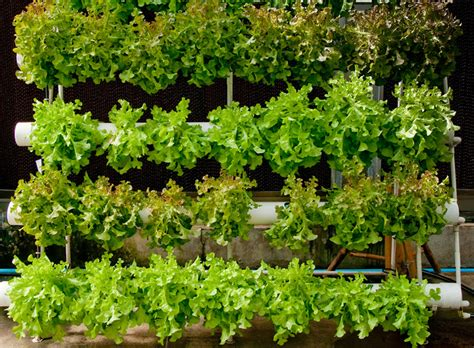 grow up how to design vertical gardens for tiny spaces