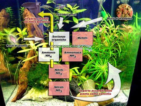 lade per acquario acqua dolce batteri nel filtro biologico come popolarlo di utili amici