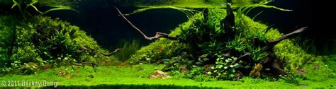 aquascape rule of thirds planted tank rule of thirds main and secondary focal point