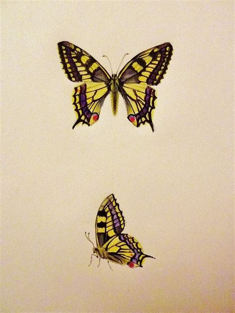 color drawings butterfly colored pencil drawings drawing pencil