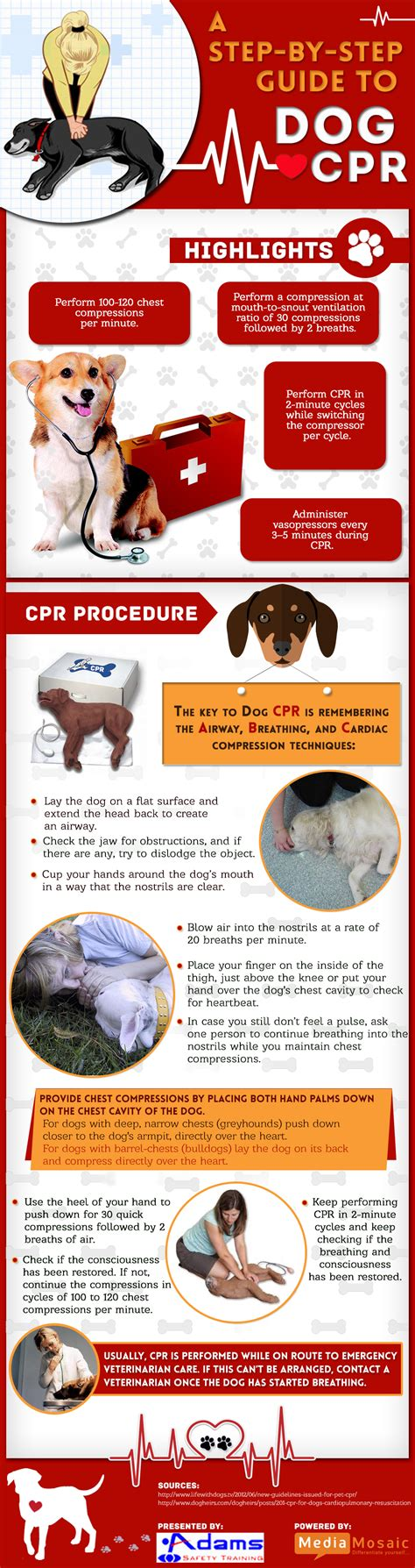 cpr on a how to perform cpr on a infographic safety