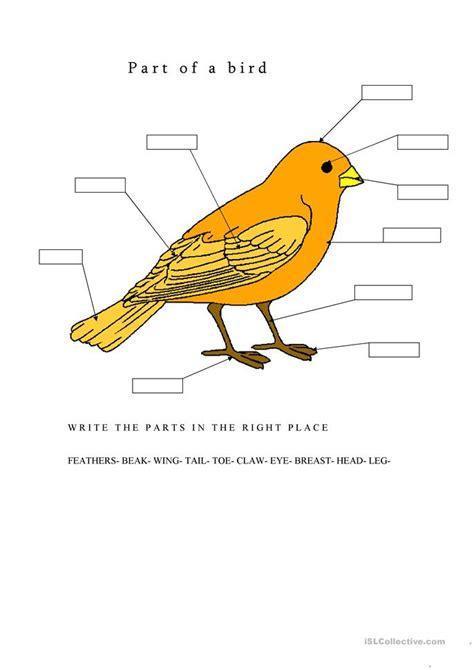 parts of a bird worksheet free esl printable worksheets