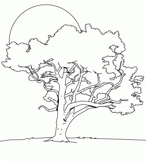 tree coloring page pdf the big tree in the night coloring pages trees coloring