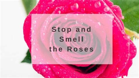 Stop Smell The Perfume How Scents Convert Into Feelings by Skin Care Tips All Skin Care Products Kosmea