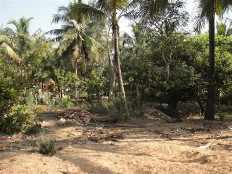 Seaview Cottages Goa by Sea View Cottages Updated 2017 Hotel Reviews Price