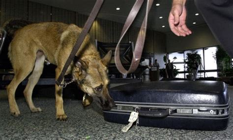 how to bomb sniffing dogs tsa s bomb sniffing dogs could be doing more report finds oversight govexec