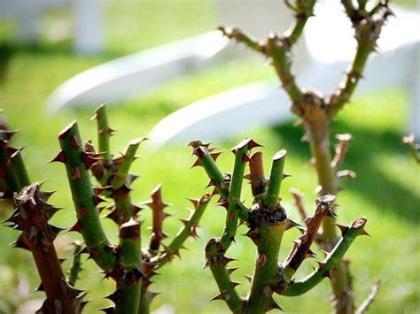 potatura piante da giardino quando potare le piante da giardino idea di casa