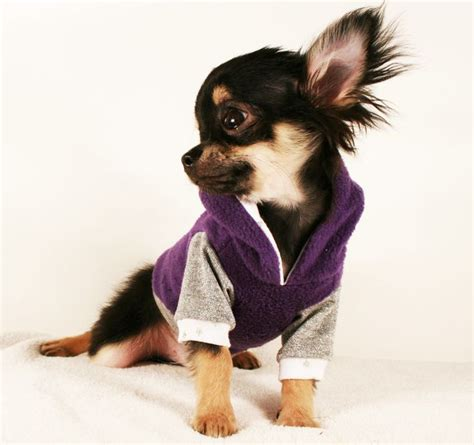 teacup puppy clothes best 25 chihuahua clothes ideas on yorkie clothes clothes and easy