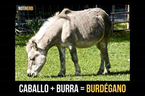imagenes de animales fusionados fusion animal animales hibridos reales taringa