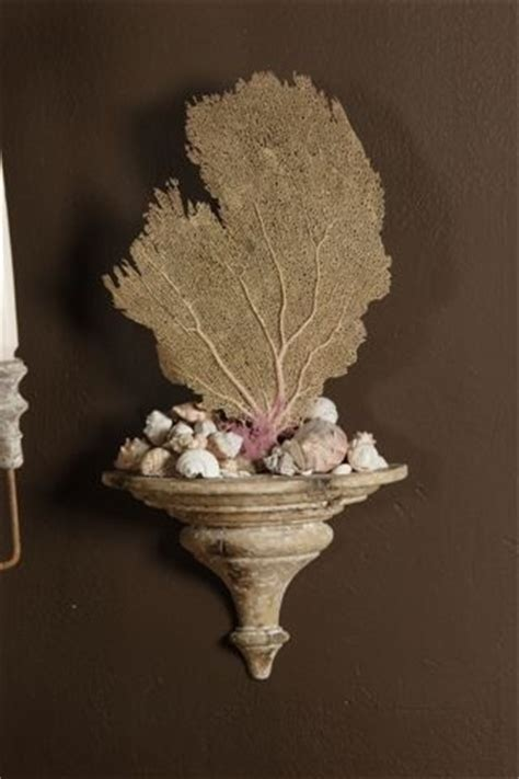 17 best images about sea fan displays on pinterest