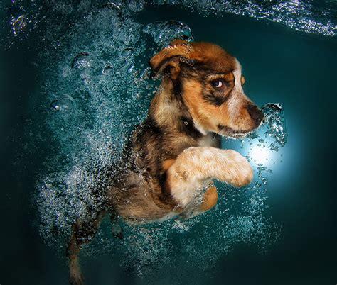 designboom dogs seth casteel snaps underwater puppies making a splash