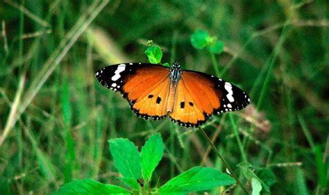 alimentos que provocan migra a 16 mariposas m 225 s bellas y ex 243 ticas del mundo via ritmo