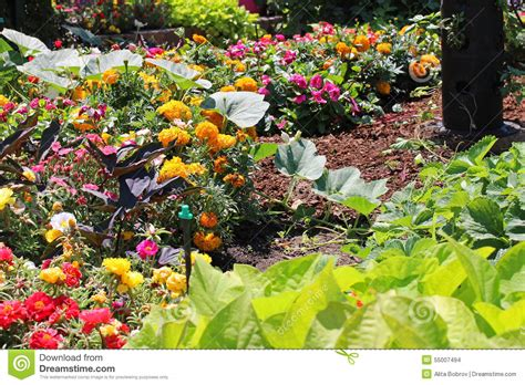 flower and vegetable garden flowers and vegetables garden stock photo image 55007494