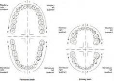 sextant meaning in dentistry dental charts to help you understand the tooth numbering
