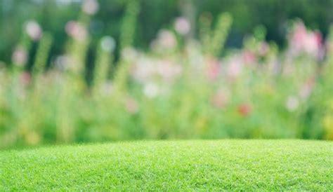 salon de jardin promo 1629 gazon et pelouse plantation entretien c 244 t 233 maison