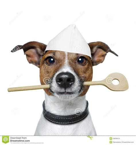 cooking dogs chef with cooking spoon stock photo image 23638414