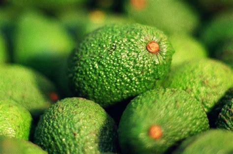 asian markets ripen  mexican avocados