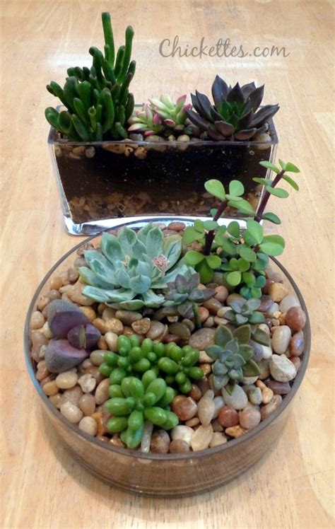 gardens in glass containers succulents planted in glass containers gardening