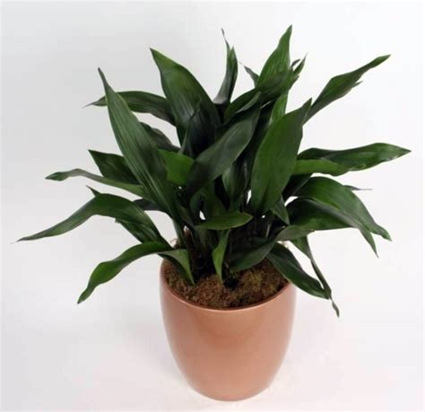 indoor plants that need little light what indoor plants need little light interior design