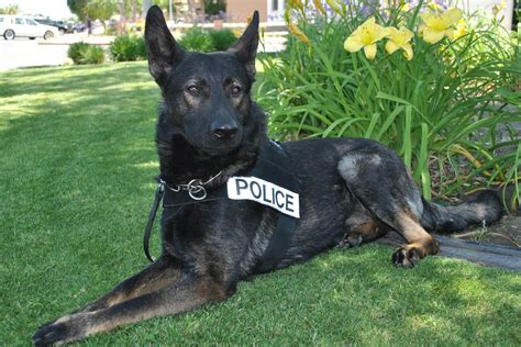 that won t hunt that won t hunt cops can t keep you waiting for k 9s supreme court says nbc news