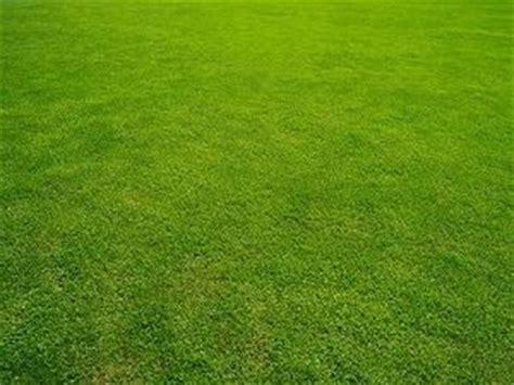Pilze Im Rasen Zu Nass by Rasenkrankheiten Bek 228 Mpfen Und Vorbeugen