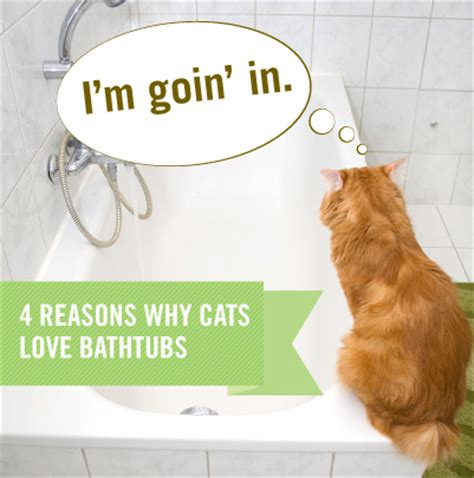 why do cats like bathtubs cats love bathtubs here s why