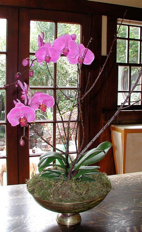 Orchid Planter Ideas by Fabulous Farmers Market Orchids
