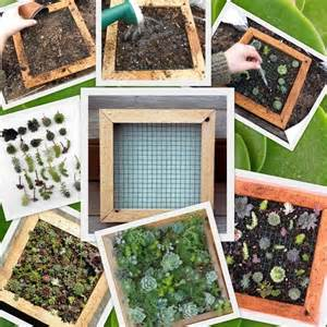 Diy Vertical Garden Kit Succulent Living Wall Vertical Picture Kit Buy This
