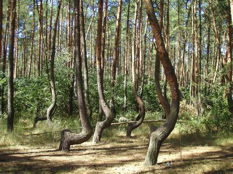 crooked forest west pomerania poland mother nature at 10 off the beaten track places