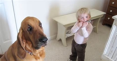 why are they called dogs toddler starts harmonica but it s their that has in laughter