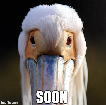 Soon Meme Generator - image tagged in animals soon memes imgflip