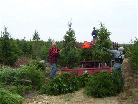 christmas tree wholesaler canada international