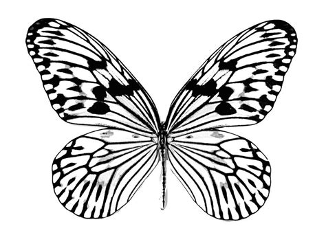 black and white coloring pages of butterflies mariposa para colorear