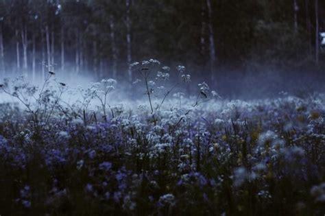 field tumblr
