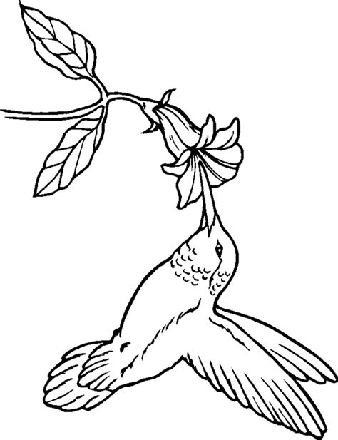 coloring page hummingbird free hummingbird pictures coloring home