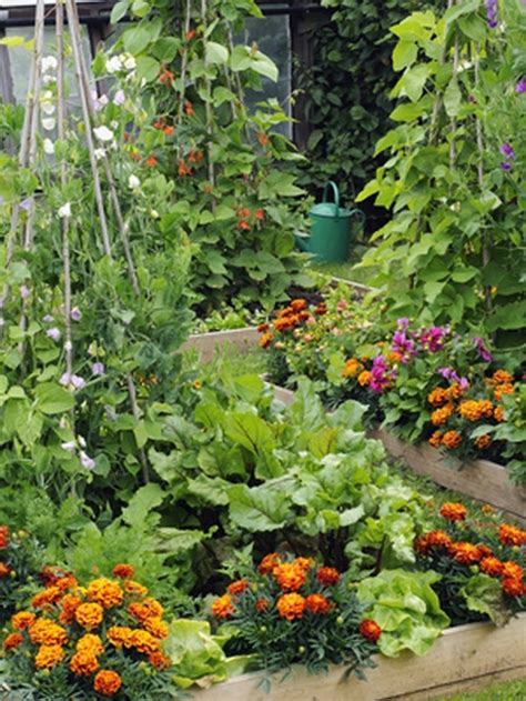 Best Flowers For Vegetable Garden Thankslove Flowers And Vegetables Planted Together Mix