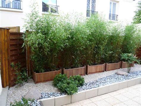 siepi da vaso per terrazzo piante terrazzo sempreverdi idee per il design della casa