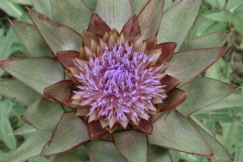 fiore carciofo my site caad2006 corso di progettazione architettonica