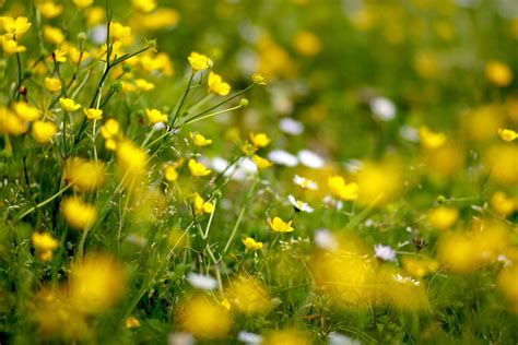 spring meadow wallpapers wallpaper cave spring meadow wallpapers wallpaper cave