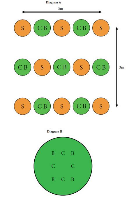 How To Grow A Three Sisters Garden Three Garden Layout